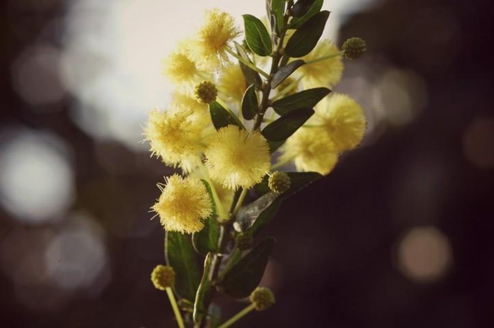 mimosa-matrimonio-torino-nozze-simmi